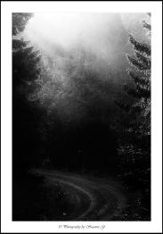 Vägen leder dig mot ljuset