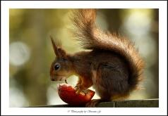 Ett äpple om dagen...