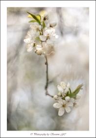 117 - I full blom